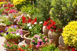 Potted Plants Landscaping